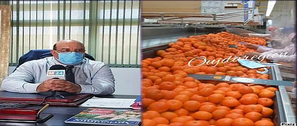 شاهد..برتقال بركان يفتح 2 مليون يوم عمل ويجلب العملة الصعبة